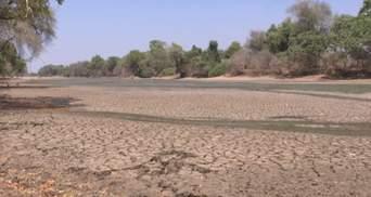 Сильнейшая засуха в истории: в Южной Африке погибли более 100 слонов