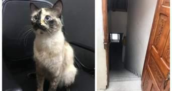 Кошка спасла младенца от гибели в Колумбии: событие попало на видео