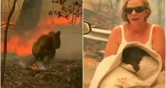 В Австралии женщина спасла коалу из лесного пожара: чувственное видео