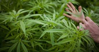 В Україні вперше виправдали чоловіка, який вирощував марихуану