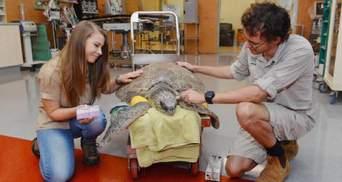 Пожары в Австралии: семья известного зоозащитника Ирвина спасает животных от смерти – фото