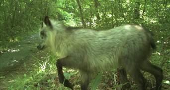 Пострадавшая от радиации Фукусима процветает: увеличилась популяция животных – видео