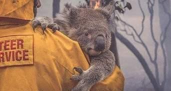 Внаслідок масштабних пожеж в Австралії 113 видів тварин можуть вимерти: потрібна допомога