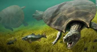 Остатки гигантской черепахи нашли в Южной Америке: фото