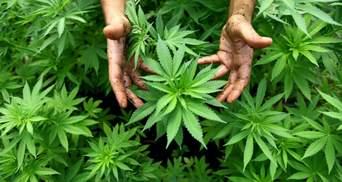 Употребление марихуаны мужчинами влияет на развитие их детей, – результаты исследования