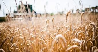 Затяжний карантин може згубно вплинути на агросектор: пояснення експерта