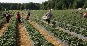 У посольстві спростували, що Фінляндія планує чартером забрати українців для роботи на полях