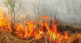 Уряд розгляне питання підняття штрафів для паліїв листя та можливу криміналізацію підпалів