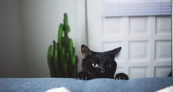 У В'єтнамі вбивають та їдять чорних котів: люди вірять, що вони лікують від коронавірусу