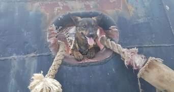 """Собака, який перебував у російському полоні, знову охороняє буксир """"Яни Капу"""""""