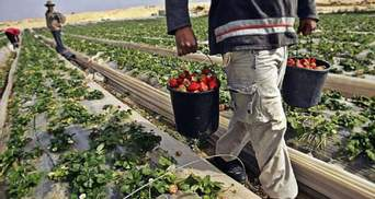 Фінські фермери розраховують на 15 тисяч українських працівників, – Пристайко