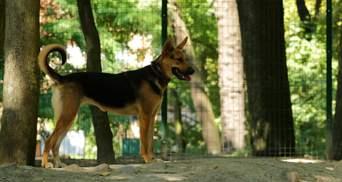Время вспомнить скандал с нардепом и пенсионеркой: Минюст продает собак за долги хозяев