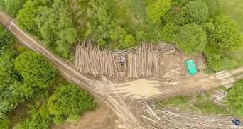 """Каковы последствия массовой вырубки лесов: фото """"лысых"""" Карпат"""