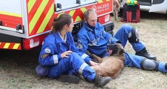 Хвостатые спасители: как собаки ищут людей под завалами в Киеве – фото, видео