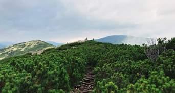 В Україні проведуть інвентаризацію лісів: вперше за понад 20 років