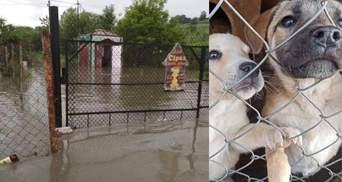 На Прикарпатье непогода затопила собачий приют: фото и видео
