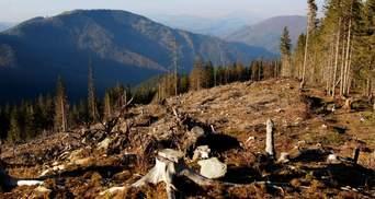 Незаконная вырубка лесов: рейдов много, раскрытых дел – очень мало