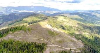 Наводнение на Западе Украины: прокуратура и СБУ расследуют дела об уничтожении леса