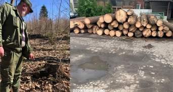 ДБР почало масштабну боротьбу з незаконною вирубкою лісів: деталі