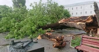 В Луцке во время грозы упал знаменитый ясень, под которым сидела Леся Украинка – фото, видео