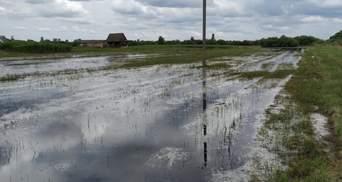 Паводок на Волині: підтопленими залишаються тисячі гектарів сільськогосподарських угідь – фото