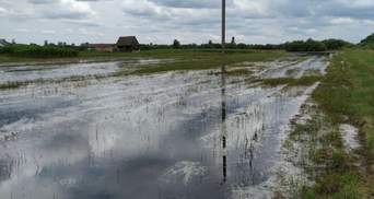 Паводок на Волыни: подтопленными остаются тысячи гектаров сельскохозяйственных угодий – фото