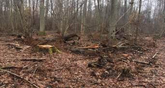 Бізнес поза законом: масштабну вирубку лісів викрили у західних та північних областях – фото