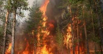 Печальная статистика: за пол года площадь пожаров в лесах Украины увеличилась в 40 раз