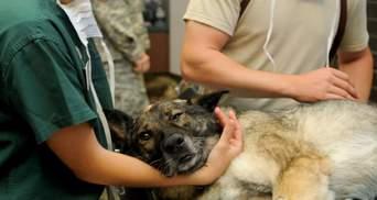 На Запоріжжі пенсіонер скинув собаку з моста: яке покарання йому загрожує