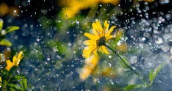 Прогноз погоды на 20 августа: будет жарко, но с дождями