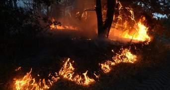 Пострадавшим в пожарах на Луганщине выделили почти 2,3 миллиона гривен