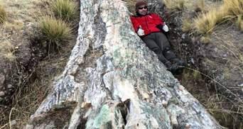 Унікальна знахідка: в Перу відкопали дерево віком у понад 10 мільйонів років – фото