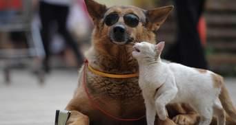 Це корупційна схема: чим небезпечний законопроєкт про обов'язкову реєстрацію домашніх тварин