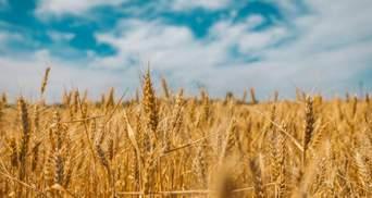 Суворий контроль і реформа АМКУ: експерт назвав важливу передумову запровадження ринку землі