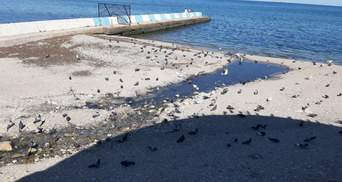 Жаловалась даже Поклонская: на пляже в оккупированной Феодосии отдыхают среди нечистот – видео