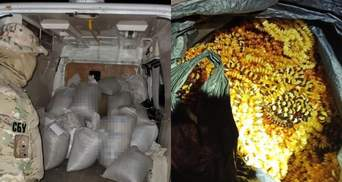 Янтарь на 4 миллиона: На Ровненщине разоблачили канал контрабанды в Азию - фото