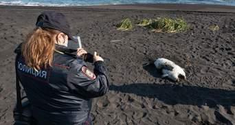 Утечка нефти на Камчатке: тысячи погибших животных и десятки пострадавших людей – видео