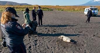 """Экологическое бедствие на Камчатке: власть говорит, что все """"нормализовалось"""" само по себе"""