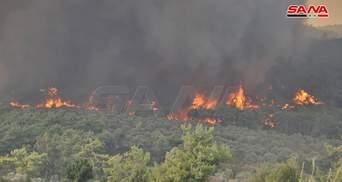 Масштабні лісові пожежі охопили захід Сирії: на боротьбу з вогнем кинули армійську авіацію