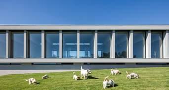 Посеред виноградника: в Португалії побудували готель для котів та собак – фото