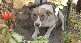 На Луганщине спасают животных, пострадавших вследствие масштабных пожаров