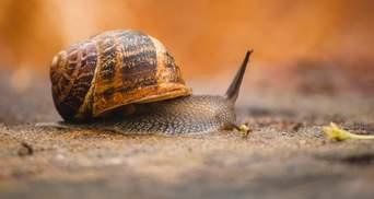 Щоб вирощувати равликів: на Запоріжжі хлопець вкрав урну для голосування