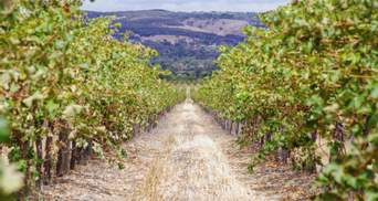 В Австралии составили карту виноградников с помощью спутника и искусственного интеллекта
