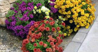 В Одеській школі викопали квіти після від'їзду мера: ганебне відео
