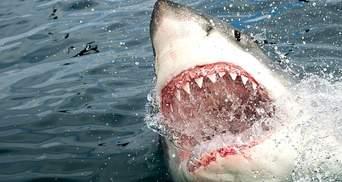 У Єгипті акула покусала українців: дитина втратила частину руки та перебуває в реанімації