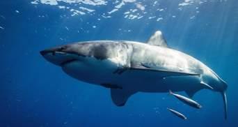 Акула напала на семью украинцев в Египте: в МИД рассказали подробности