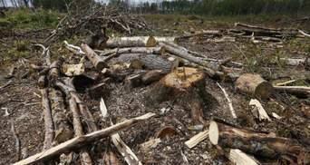 Бесценное богатство, которое не ценят: о состоянии природы в Украине