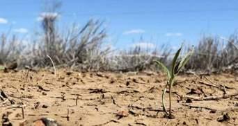 Зупинити знищення природи в Україні може лише держава, але вона цього не робить, – експерт