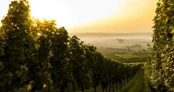 Что такое апелласьон и терруар: пополняем винный словарь