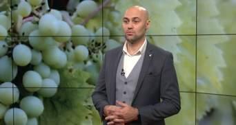 Чому сомельє спльовують вино та навіщо виноград топчуть ногами: цікаве інтерв'ю з експертом